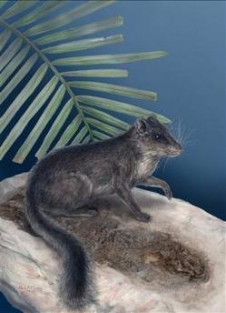 rat_squirrel.jpg