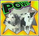 dogs_pow.jpg