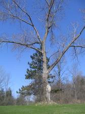 nature_walk_tree.jpg