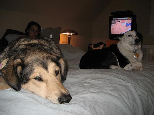 jen-dogs-bed1.jpg